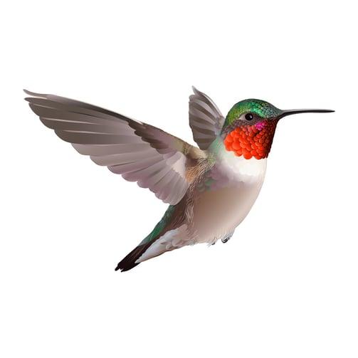 Google colibri y el SEO