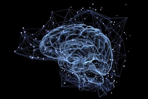 cerebro de google al descubierto