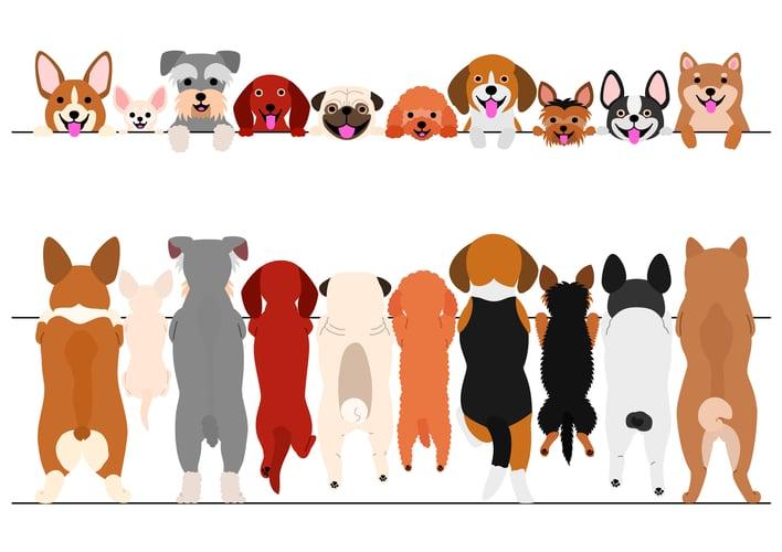 perros en embudo de ventas
